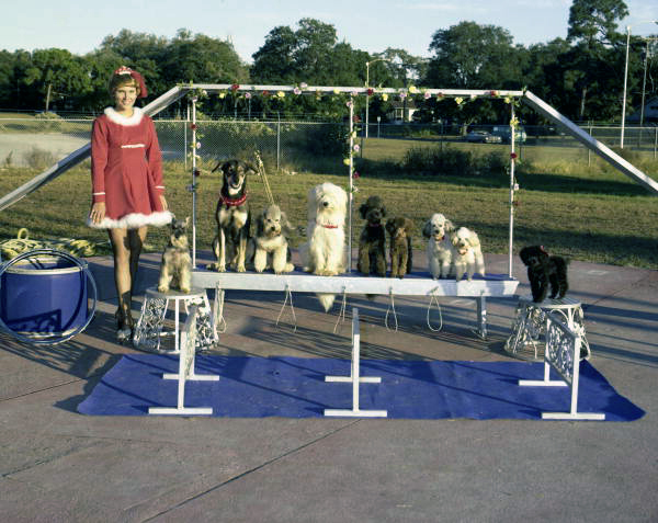 Dog act of the Sarasota High School Sailor Circus.