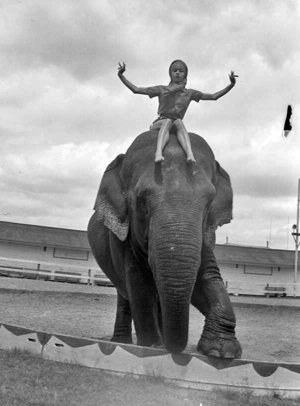 Young woman sitting on top of an elephant at the Ringling Circus in Sarasota, Florida.