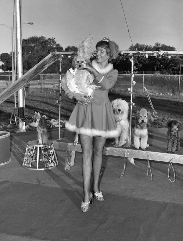View showing an unidentified student trainer with a performing dog from the Sarasota High School Sailor Circus.