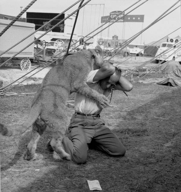 Cristiani Brothers Circus lion tamer playing with young cat during rehearsal for NBC-TV in Sarasota, Florida.