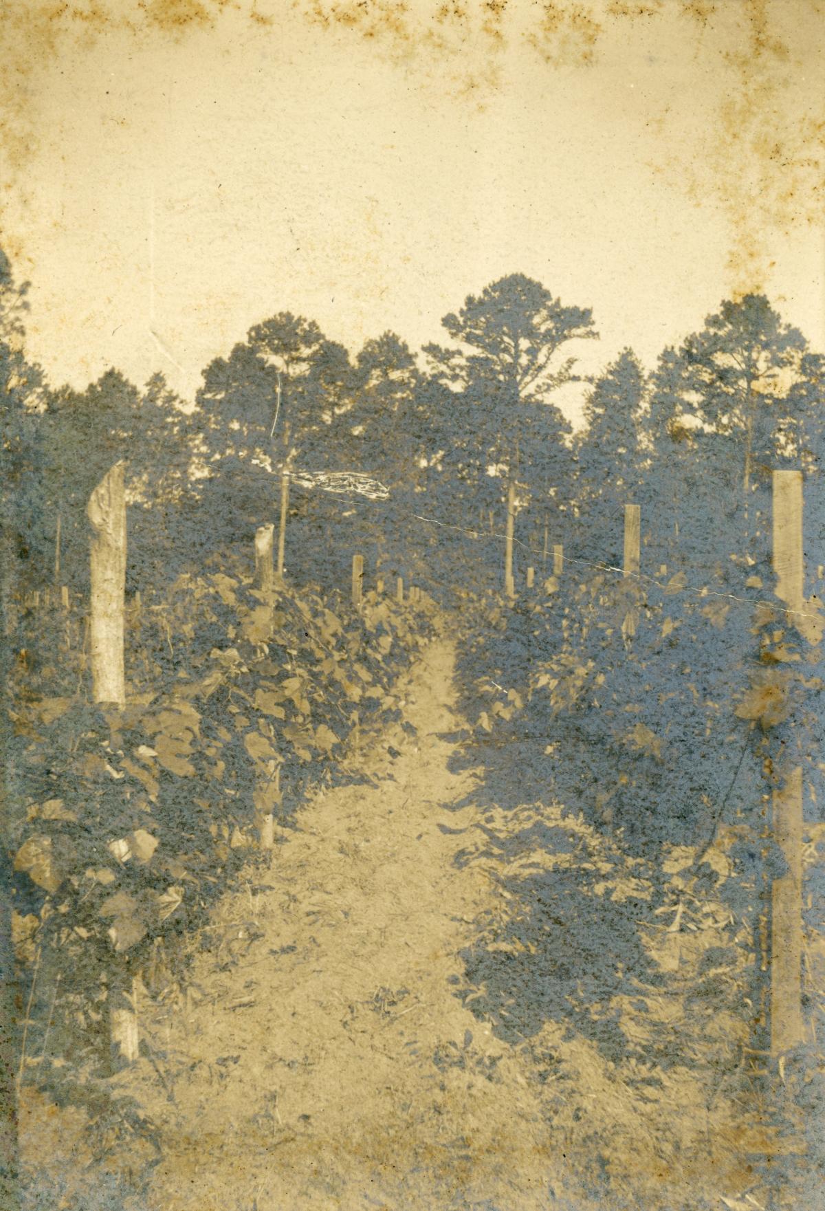 San Luis Vineyards in Tallahassee.