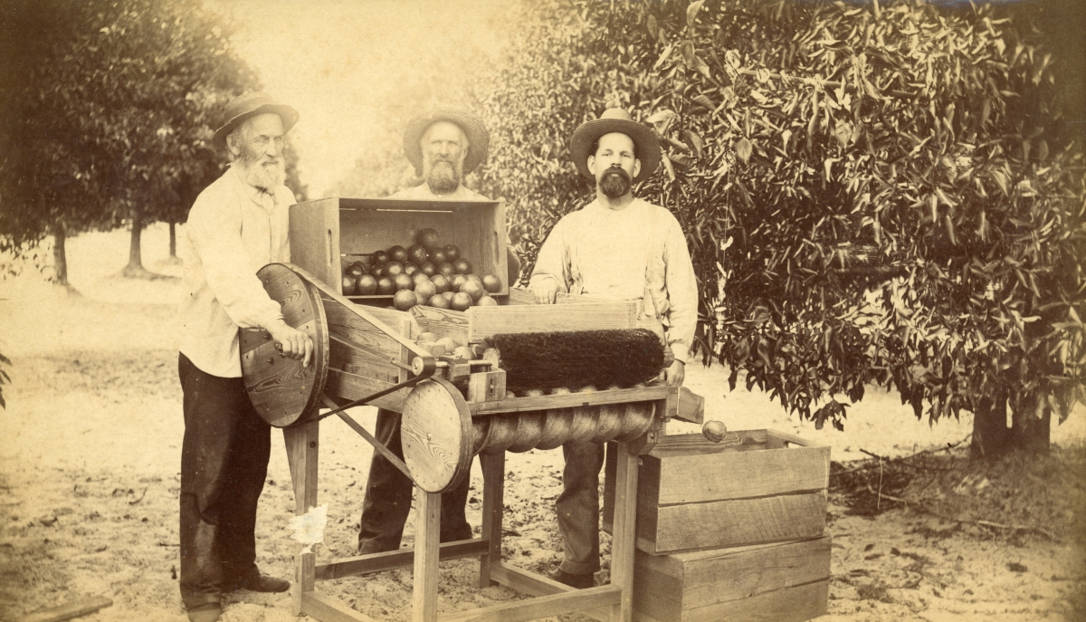 Men posing with an orange brushing machine in Pomona.