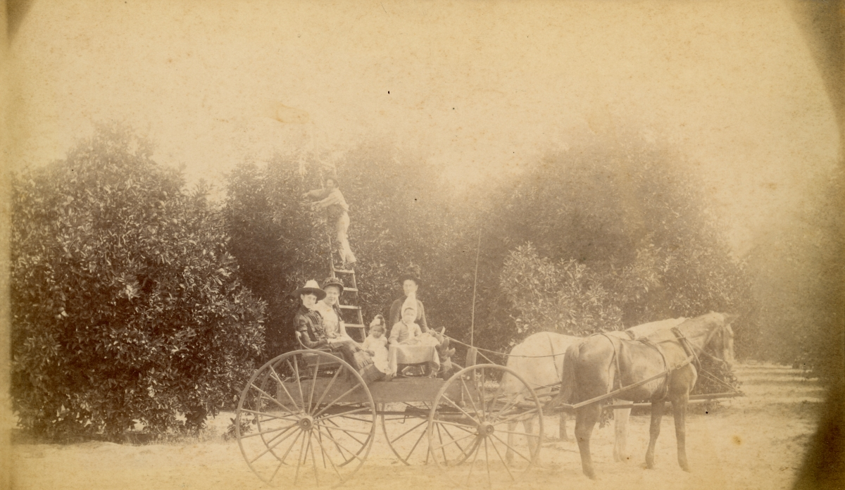 E.B. Olmstead's family at their grove in Pomona.