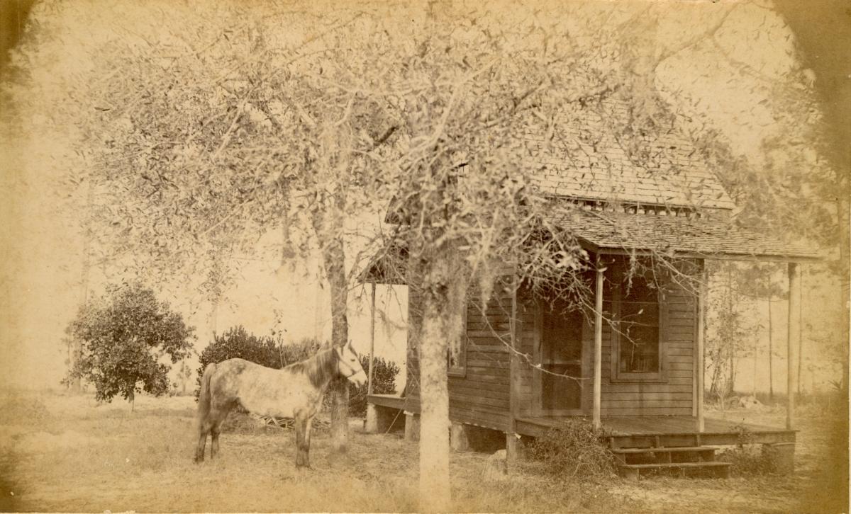 M.C. Welch's place - Pomona, Florida.
