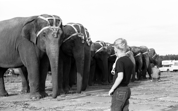 Boy in Tallahassee looking at elephants from the Clyde Beatty-Cole Bros. Circus.