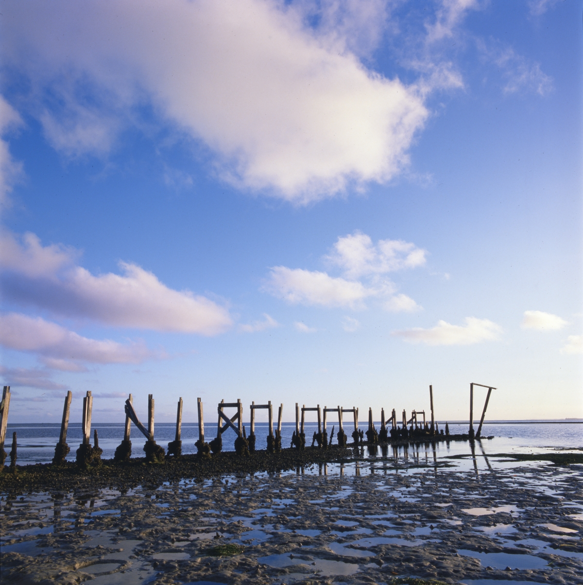 Remains of pier in Saint Marks.
