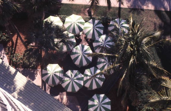 Bird's eye view overlooking umbrellas at a Marco Island resort.
