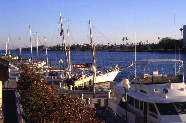 Boats docked at the Harbour Island marina in Tampa.
