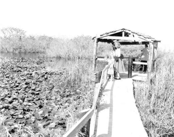 Visitors on the Anhinga Trail - Everglades National Park, Florida.