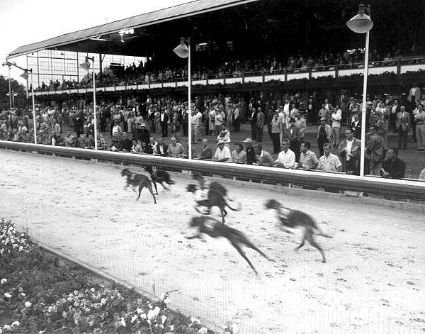 Dog racing at Tampa - Tampa, Florida .