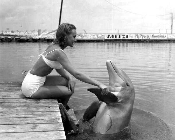 Woman shakes Flipper's flipper - Marathon, Florida.