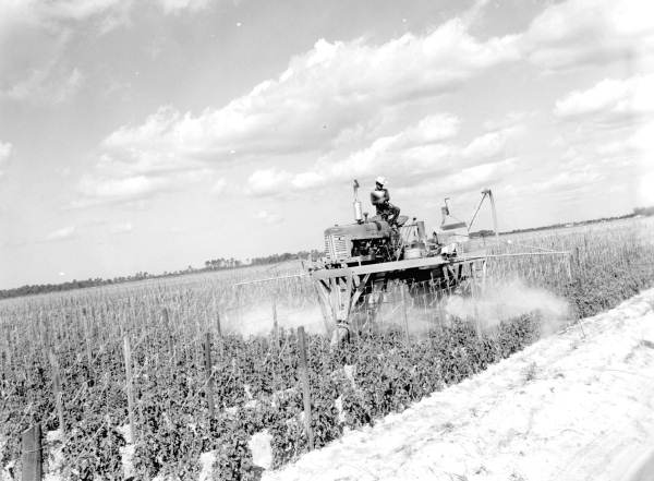 Application of pesticides to tomato field - Delray Beach, Florida.