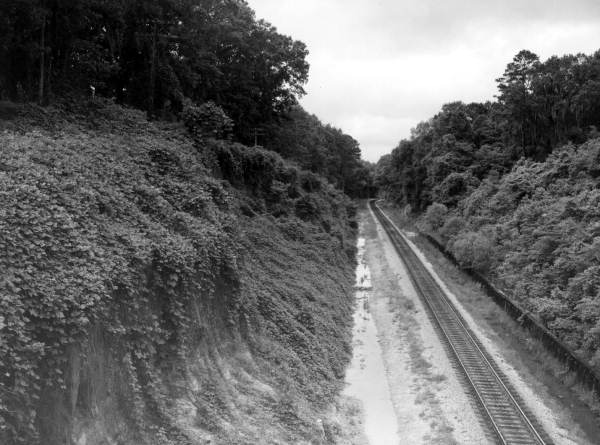 Kudzu vines growing on the slope near a railroad - Tallahassee, Florida.