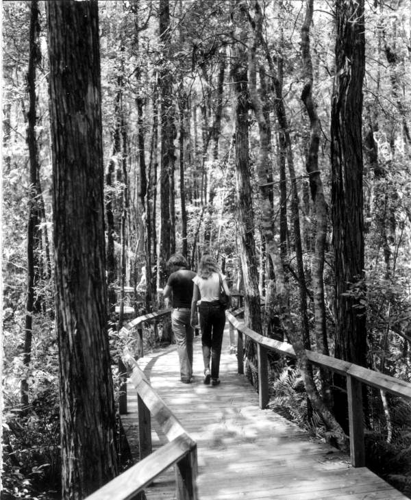 Sightseers on footbridge at the Gatorland Zoo swamp - Orlando, Florida