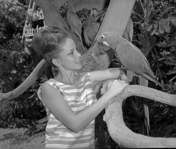 Woman with parrots at Busch Gardens - Tampa, Florida.