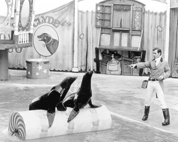 Sea lion barrel role at Sea World - Orlando, Florida.