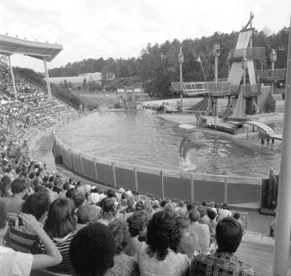 Dolphins performing jumps in a Sea World tank - Orlando, Florida.