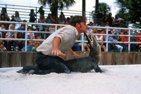 Alligator wrestling at the Gatorland theme park in Orlando, Florida.