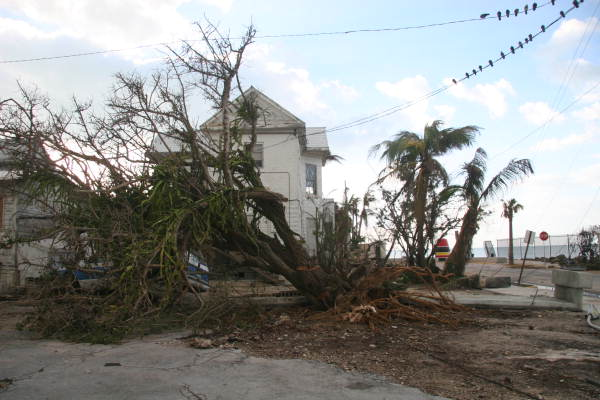 Tree uprooted near the Southernmost Point during Hurricane Wilma - Key West, Florida.