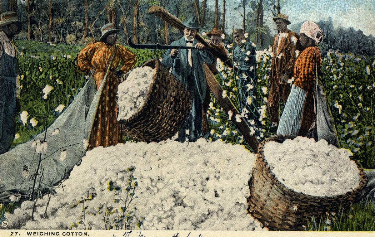 Weighing cotton.