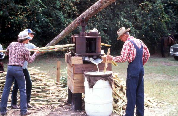 Sugar cane grinding - Orlando, Florida.