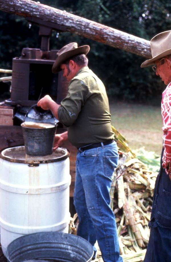 Collecting cane syrup - Orlando, Florida.