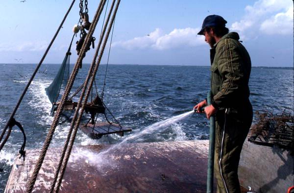 Dale Davis hoses off deck - Apalachicola Bay, Florida.