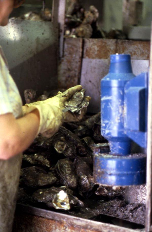 Seafood worker at Leavis Seafood - Apalachicola, Florida.