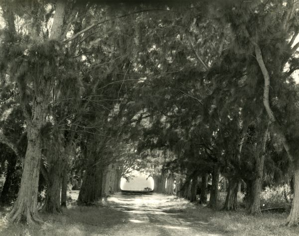 Canopy road in Tallahassee.