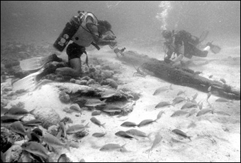 Marine archaeologists investigating ship wreckage : Upper Matecumbe Key, Florida
