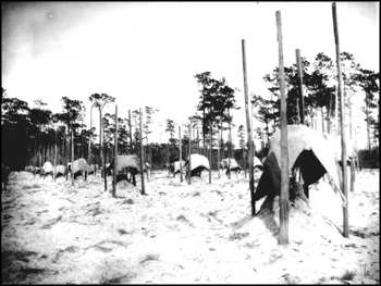 Canvas covers protecting citrus trees from the freeze (ca. 1900)