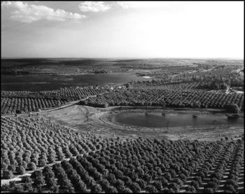 Citrus groves in central Florida (1966)
