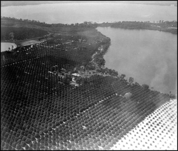 Aerial view of citrus groves: Winter Haven, Florida (ca. 1920s)
