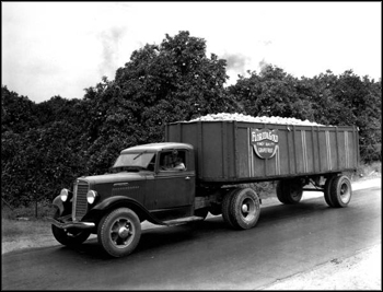 Florida Gold truck: Polk County, Florida (ca. 1940s)