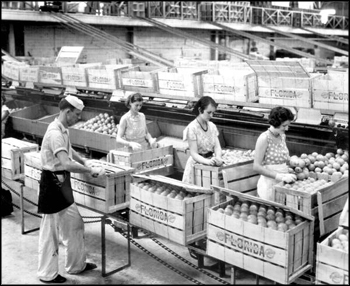 Employees at the Florence Citrus Growers Association packing boxes: Winter Haven, Florida (1934)