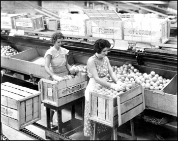 Employees of the Florence Citrus Growers Association packing boxes: Winter Haven, Florida (1943)