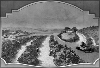 """Oranges and grapefruit groves cover countless acres among Florida's charming hills and lakes."" (1934)"