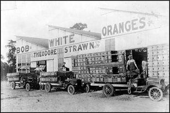 Theodore Strawn's packing house for Bob White oranges: De Leon Springs, Florida (ca. 1910)
