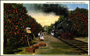 Traveling through the orange groves: Florida (ca. 1910s)