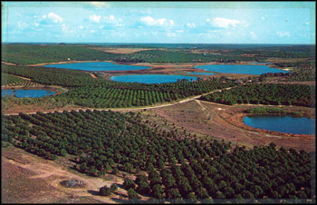 Lakes and Orange groves: Clermont, Florida (ca. 1956)