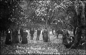 Scene in grove at Citra after freeze of December 28 and 29: Citra, Florida (1894)