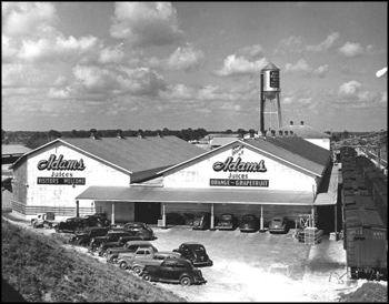 Adams packing house for oranges and grapefruit: De Leon Springs, Florida (ca. 1940s)