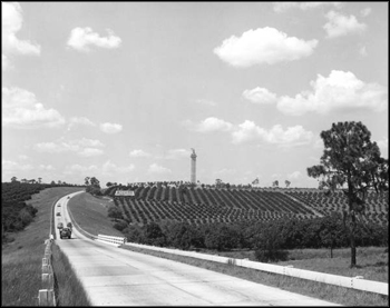 Citrus Tower: Clermont, Florida (ca. 1956)
