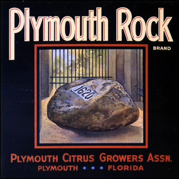 Plymouth Citrus Growers Association's Plymouth Rock brand citrus label: Plymoth, Florida (mid 1900s)