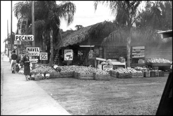 Roadside fruit stand (ca. 1940s)