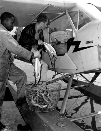 Pilot Dan Cardinal picking up seafood: Naples, Florida (1947)