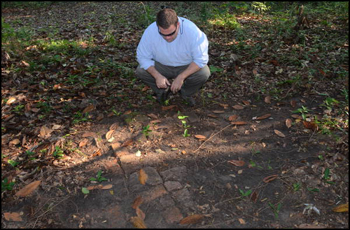 Division of Historical Resources Site Manager Dr. Robert Krause examining brick foundation structure on Grove property (2011)