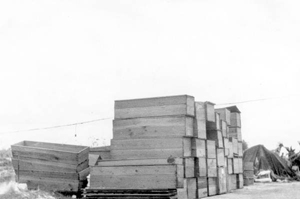 Coffins stacked along the bank of a canal, after the hurricane of 1928: Belle Glade, Florida