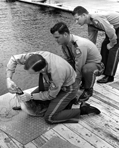 Florida Game and Freshwater Fish officers tag an alligator (1960s)