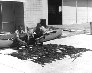 Game and fish officers with alligators (1966)